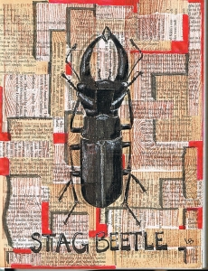 Stag beetle collage small